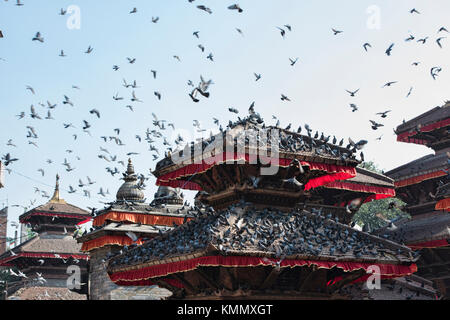 Pigeons throng a temple in Durbar Square, Kathmandu, Nepal - Stock Photo