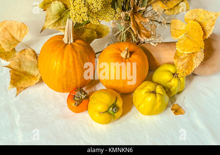 Orange pumpkins with yellow quince and persimmon,dry branch of poplar and wild flowers on white tablecloths - Stock Photo