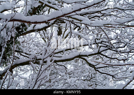 Fresh snow laden trees heavy snow covered  branches making an abstract image from light and dark areas of the image. - Stock Photo