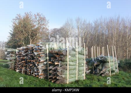 Nordmann firs in Denmark for the Christmas market - Stock Photo