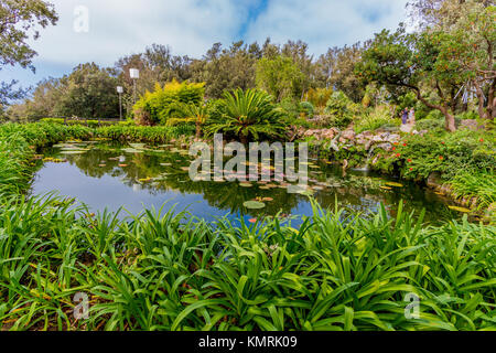 Trees and pond with lush foliage taken in the Botanical Garden on the island of Ischia, Italy - Stock Photo