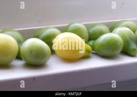Some yellow pear tomatoes ripening in the sun on a white windowledge. - Stock Photo