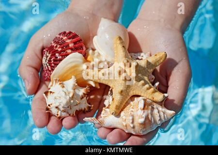 Shells in hands - Stock Photo
