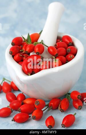 Dog rose hips Rosa canina - Stock Photo