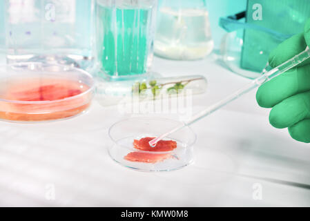 Meat cultured in laboratory conditions - Stock Photo