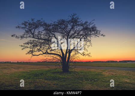 Solitary tree at dusk, in winter, at Tempelhof airport, Berlin. - Stock Photo