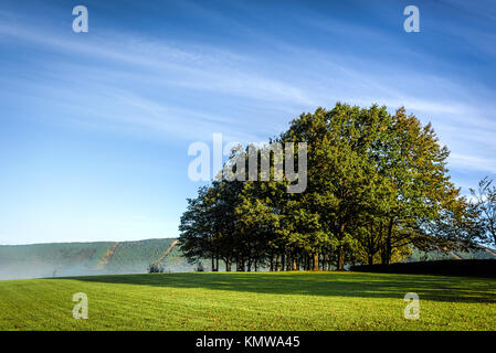 Big green round tree on a meadow under blue skies with fluffy clouds shot early in the morning - Stock Photo
