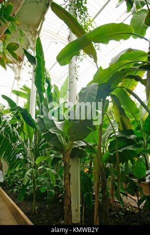 Royal Botanic Gardens Kew in Richmond, London, England Palm house Tropical glasshouse - Stock Photo
