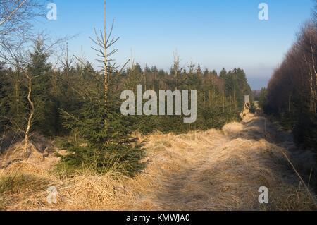 Hautes Fagnes Reserve in wintertime, Schwarzbusch, Eupen, Province Liège, Belgium - Stock Photo