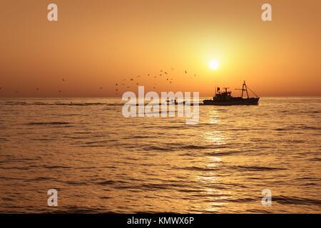 Fisherboat professional sardine catch fishery sunrise backlight with seagulls flying - Stock Photo