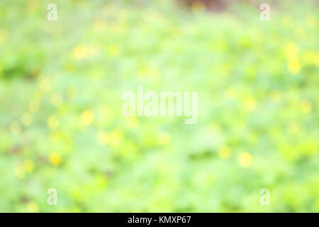 early spring. unfocused blurred yellow flowers background.