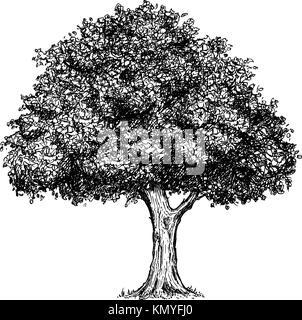 Vector hand drawing drawn illustration of tree. - Stock Photo