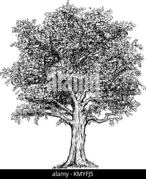 Vector hand drawing drawn illustration of tree. - Stock Photo