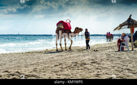camels on the beach, Djerba, 07 Nov 2014 - Stock Photo