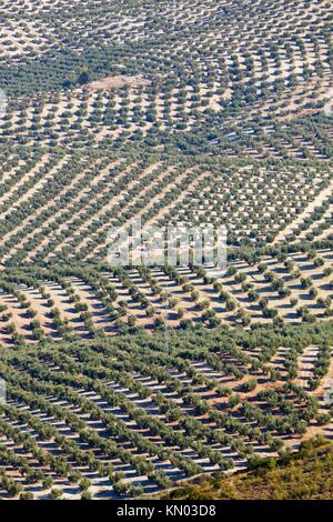 Olive groves near Mancha Real, Jaen Province, Spain - Stock Photo