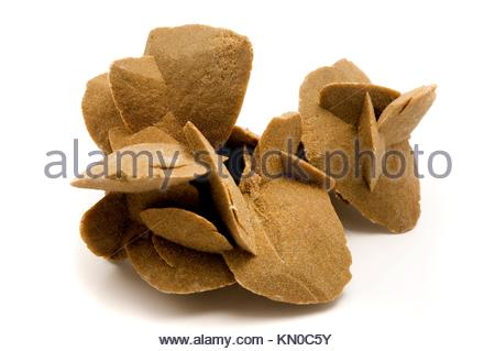 Desert Rose Rosette formations of the minerals gypsum and barite with poikilotopic sand inclusions on a white background - Stock Photo