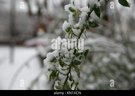 London, UK. 10th Dec, 2017. Londoners wake up to a blanket of snow in the capital. Credit: Dinendra Haria/Alamy - Stock Photo