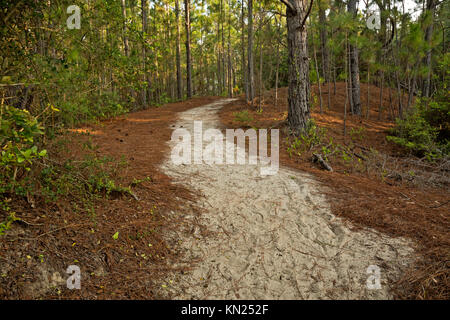 NC01041-00...Path over a sand dune in the maritime forest area of the Hammock Hills Nature Trail on Ocracoke Island - Stock Photo