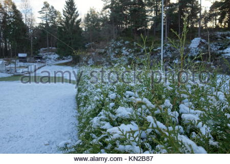 lawn and hedge covered in snow - Stock Photo