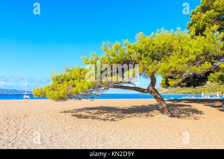 Green pine tree on famous Zlatni Rat beach n Bol town, Brac island, Croatia - Stock Photo