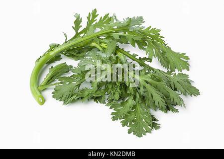 Twig of fresh green Shungiku on white background - Stock Photo