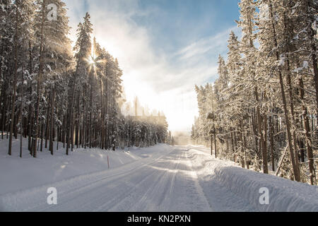 Sun shines through the trees on the snow-covered Grand Loop Road at Yellowstone National Park in winter January - Stock Photo