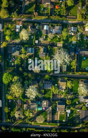 Allotment garden Nauheimer Straße, Duisburg-Neumühl, flowering trees, allotment garden, allotments, garden sheds, - Stock Photo