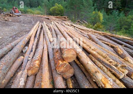 group of pine logs felled in a forest, Anso valley, Pyrenees, Huesca, Aragon, Spain. - Stock Photo