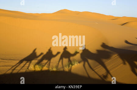 Tourists are led through the dunes to a local oasis on camels. - Stock Photo