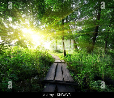 Sunrise over a wooden bridge in the forest. - Stock Photo