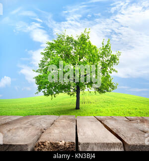 Table and green tree in a spring field against the sky. - Stock Photo