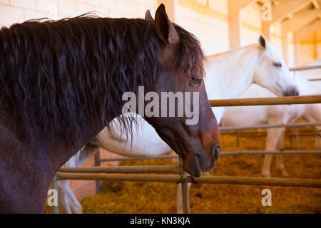 Horses in a row at cattle fair in Spain beautiful portrait. - Stock Photo
