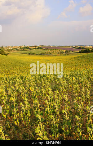 Valensole - Provence. - Stock Photo