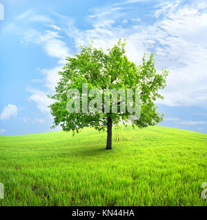 Green tree in a spring field against the sky. - Stock Photo