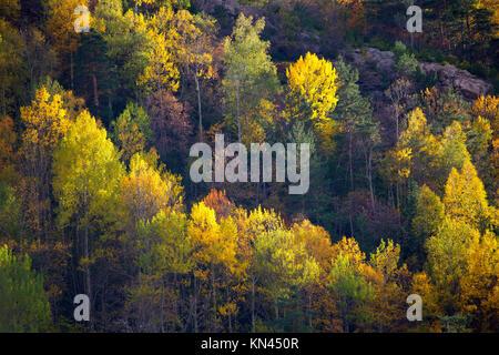 Autumn fall forest in Pyrenees Valle de Ordesa Huesca Spain. - Stock Photo