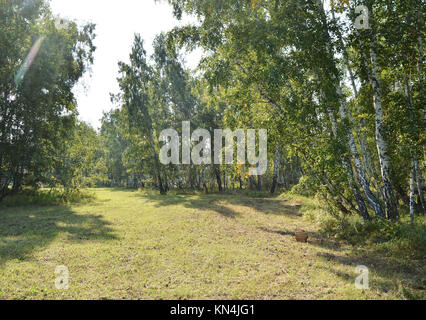 A beautiful meadow with an oblique grass in the forest in Sunny summer day. - Stock Photo