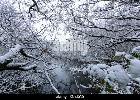 Wirral Country Park - A winter's scene - Stock Photo