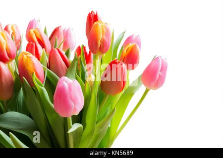 Spring color tulips in a bouquet with pink, red beautiful flowers isolated on white. - Stock Photo