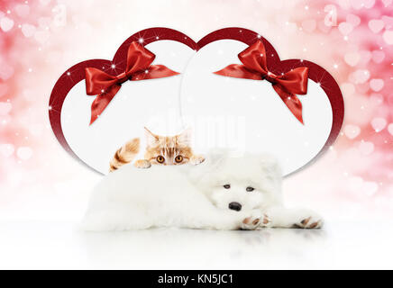 valentine gift card or pets store signboard with cat and dog together heart shape and red ribbon bow on christmas lights background blank template and