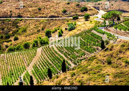 vineyard on Cote Vermeille near Port-Vendres, Languedoc-Roussillon, France. - Stock Photo