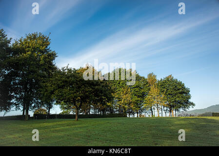 Trees on a meadow under blue skies with fluffy clouds shot early in the morning - Stock Photo