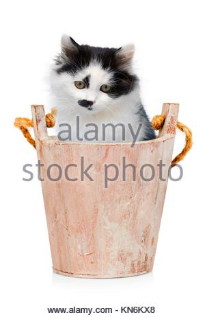 Kitten in wooden bucket on white background. - Stock Photo