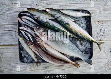 Fresh fishes mix hake seabass sardine mackerel anchovies. - Stock Photo