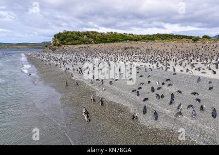 Island of Penguins in the Beagle Channel, Ushuaia, Argentina. - Stock Photo