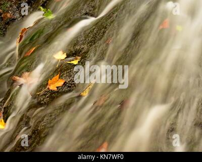 Weir in mountain stream. Colorful leaves  on stones in cold dark water. Shinning bubbles create bright trails on - Stock Photo