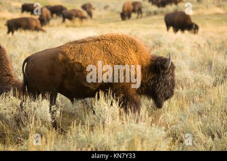 yellowstone national park christian singles Days 2-3 journey by snow coach into awe-inspiring yellowstone national park  coordinating multiple activities throughout a single day can be tricky,.