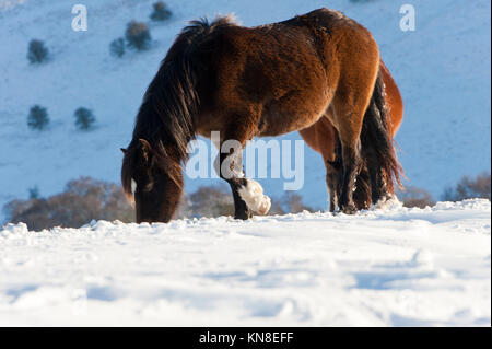 Builth Wells, (Mynydd Epynt) Powys, Wales, UK. 11th December 2017. After two days of heavy snow in Powys, with a - Stock Photo