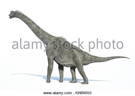 Photorealistic 3 D rendering of a Brachiosaurus. On white background with drop shadow and clipping path included. - Stock Photo