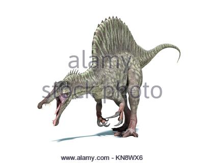 Spinosaurus dinosaur. Very detailed and scientifically correct. Isolated on white background with drop shadow and - Stock Photo