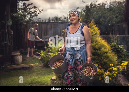 Cheerful senior women farmer in garden with crop of ripe strawberries during summer harvesting season in countryside - Stock Photo